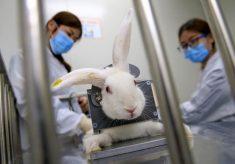 Deputados derrubam veto, e testes de cosméticos em animais ficam proibidos em Minas Gerais