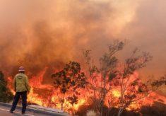 Incêndio florestal fatal na Califórnia cresce e só está 30% contido Comente